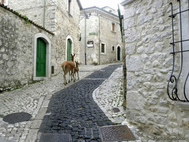 Civitella Alfedena, Cervi in paese